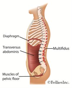 Bauchkapselsystem